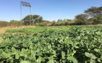 Turkana, Kenya, gardens, IDES, CMF International