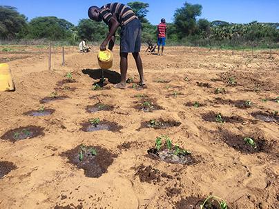 Turkana, Kenya, farming, solar irrigation, Eric Lorupoe